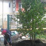 деревья большемеры в Екатеринбурге