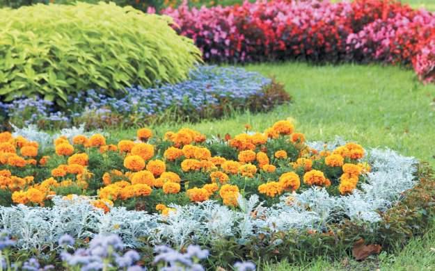Ландшафтные цветники
