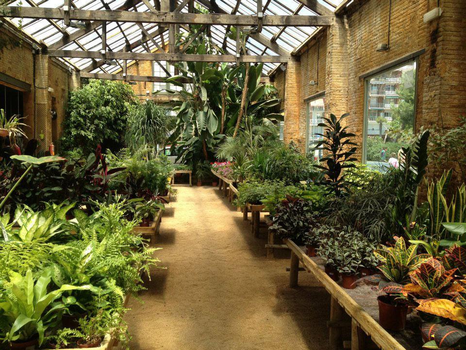 Выращивание растений в зимнем саду 11