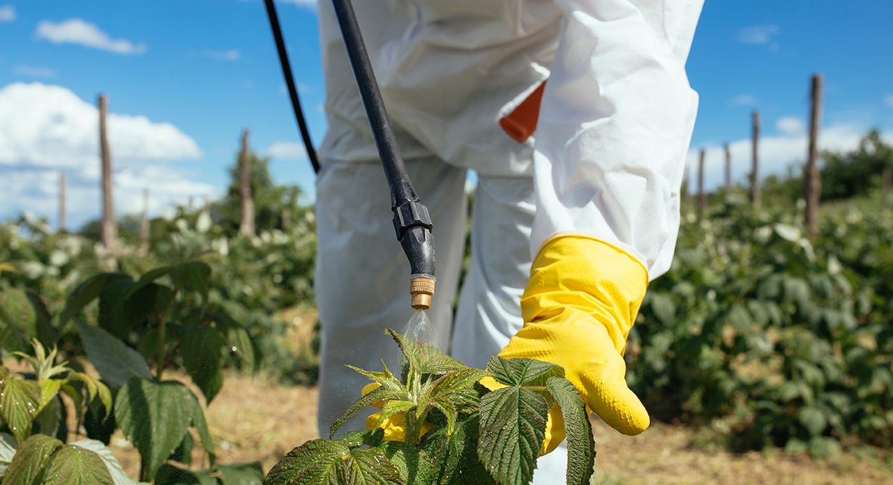 обработка растений от болезней